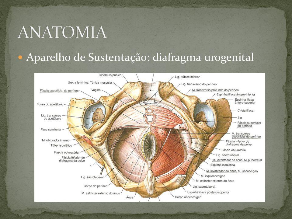 Acd: Adrianna Amaral de Aragão Preceptor: Dr. José Slaibi - ppt ...