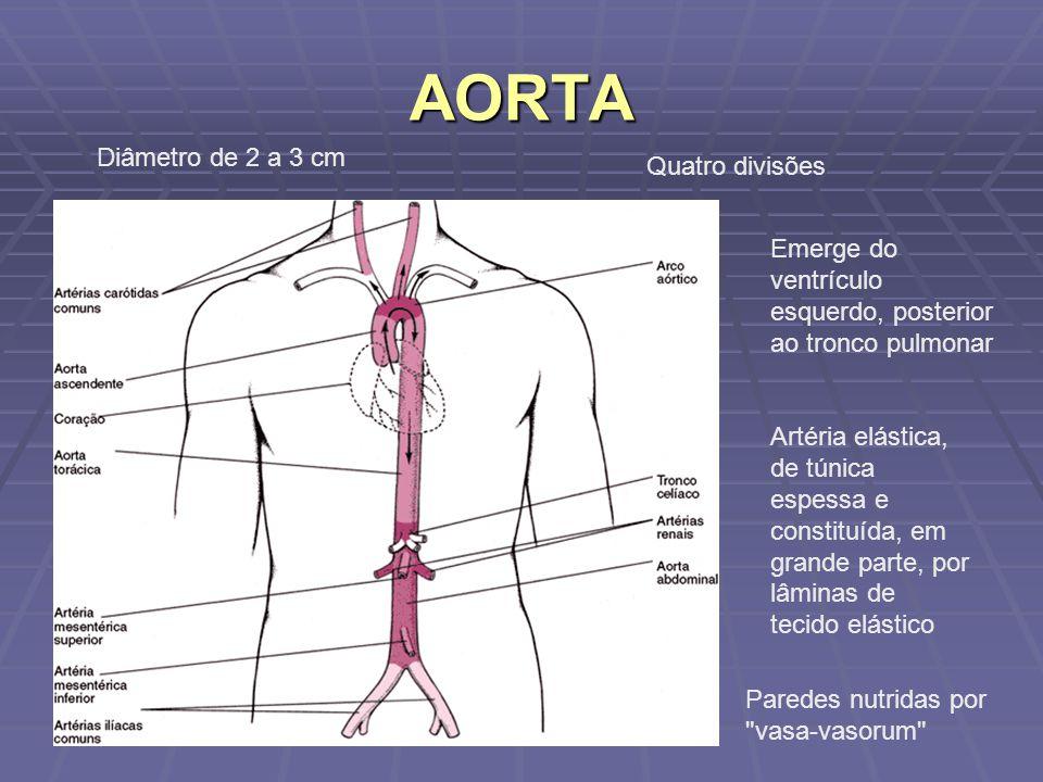 ANATOMIA CORONARIANA E DE GRANDES VASOS - ppt video online carregar