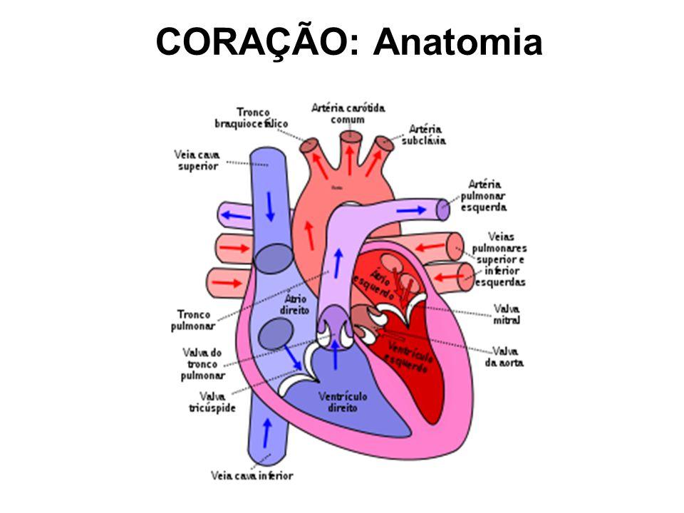 Sistema cardiovascular anatomia e fisiologia
