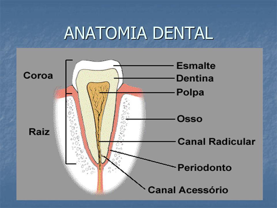 Asombroso Vídeos Anatomía Dental Friso - Anatomía de Las Imágenesdel ...