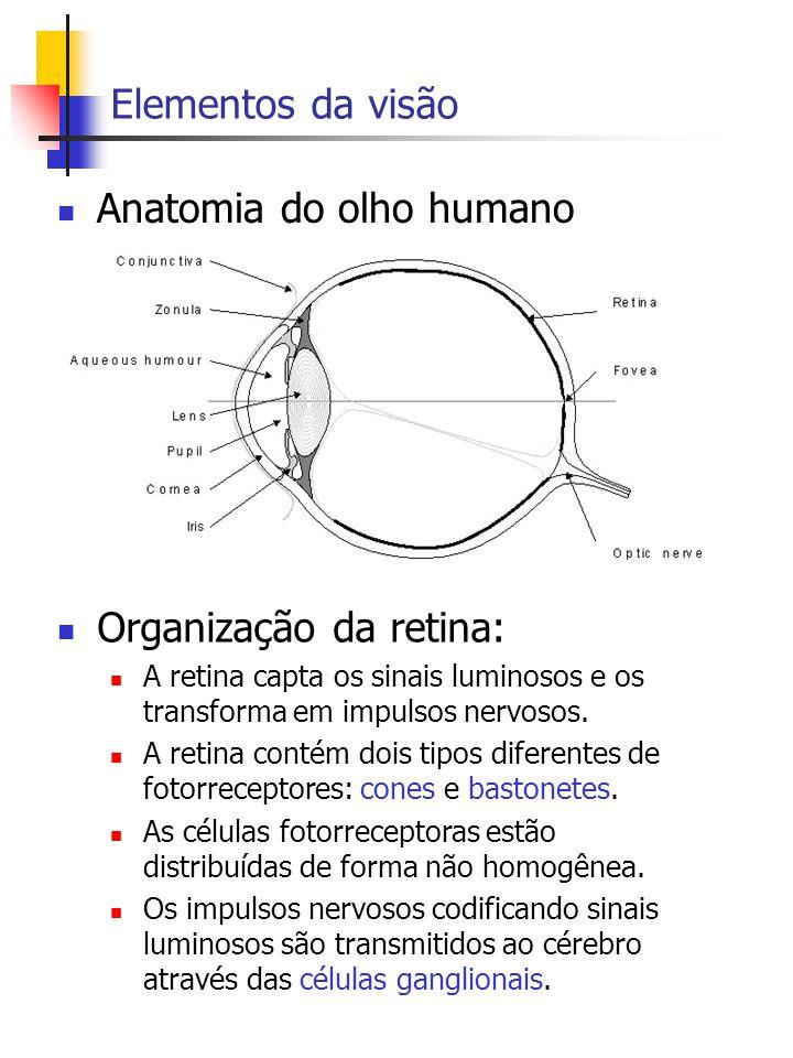 Sistema Visual Humano Anatomia e Processamento de Sinais - ppt carregar