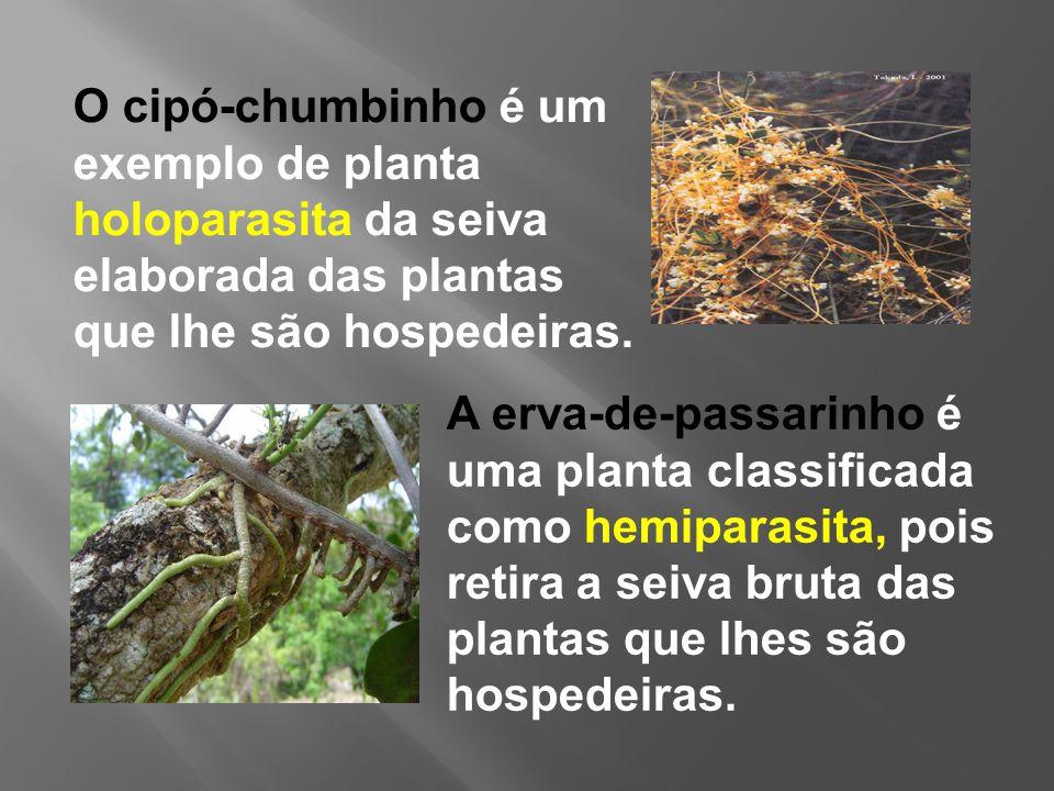 exemple de hemiparazite