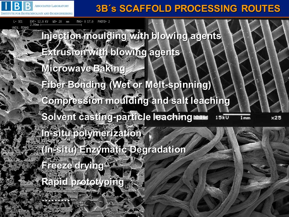 3B´s SCAFFOLD PROCESSING ROUTES