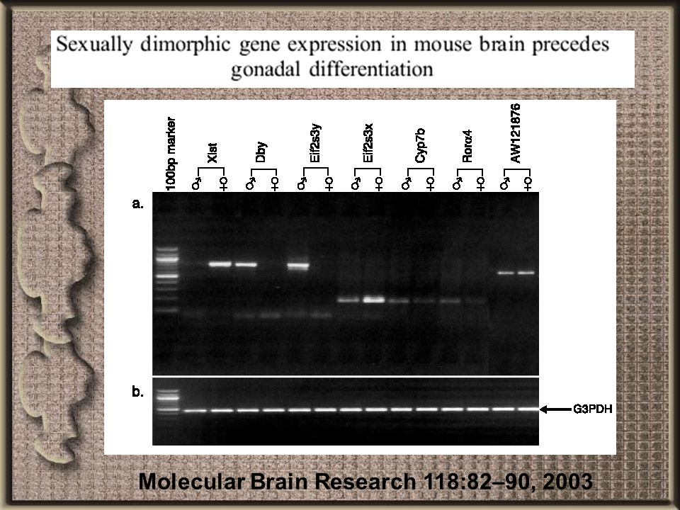 Molecular Brain Research 118:82–90, 2003