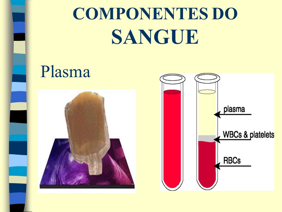 COMPONENTES DO SANGUE Plasma