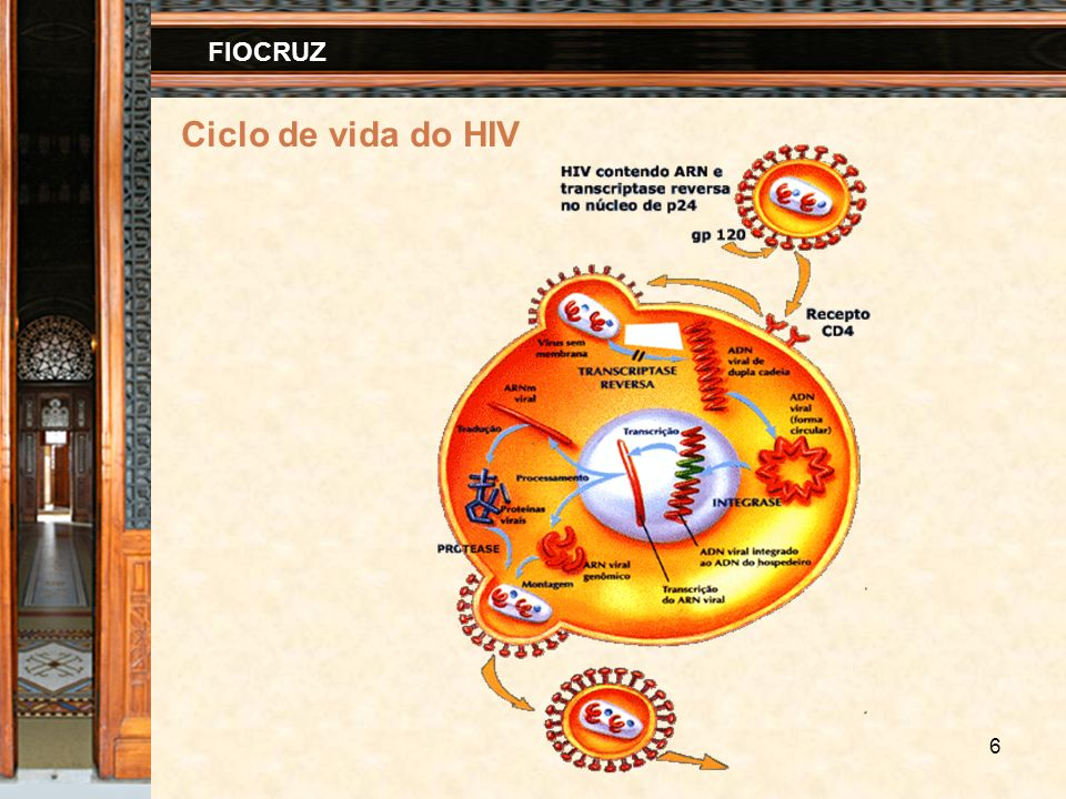 Ciclo de vida do HIV FIOCRUZ