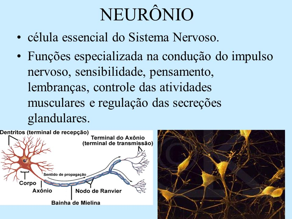 NEURÔNIO célula essencial do Sistema Nervoso.