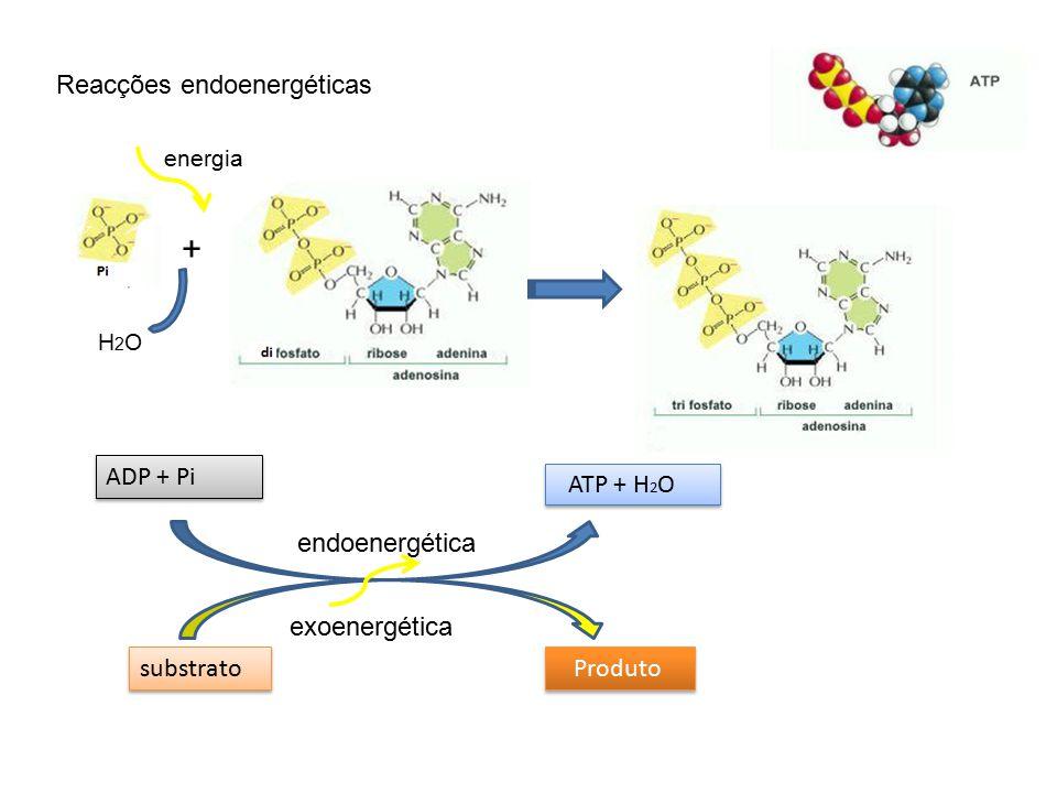 Tipos de reaces fases da fotossntese ppt carregar reaces endoenergticas adp pi atp h2o endoenergtica ccuart Images