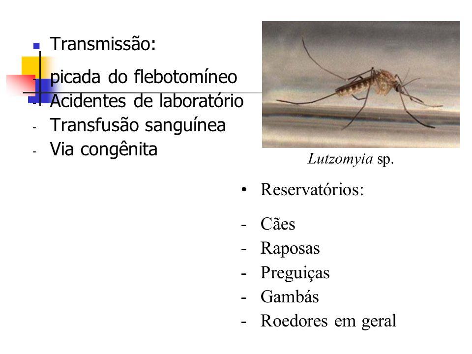 mi a lambia parazita)