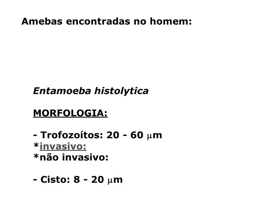 entamoeba histolytica pdf ciclo biologico