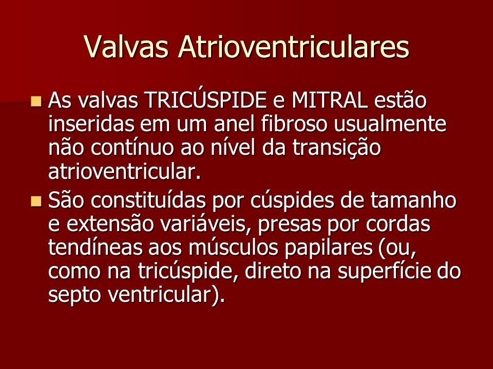 Anatomia Das Valvas Cardíacas Ppt Video Online Carregar