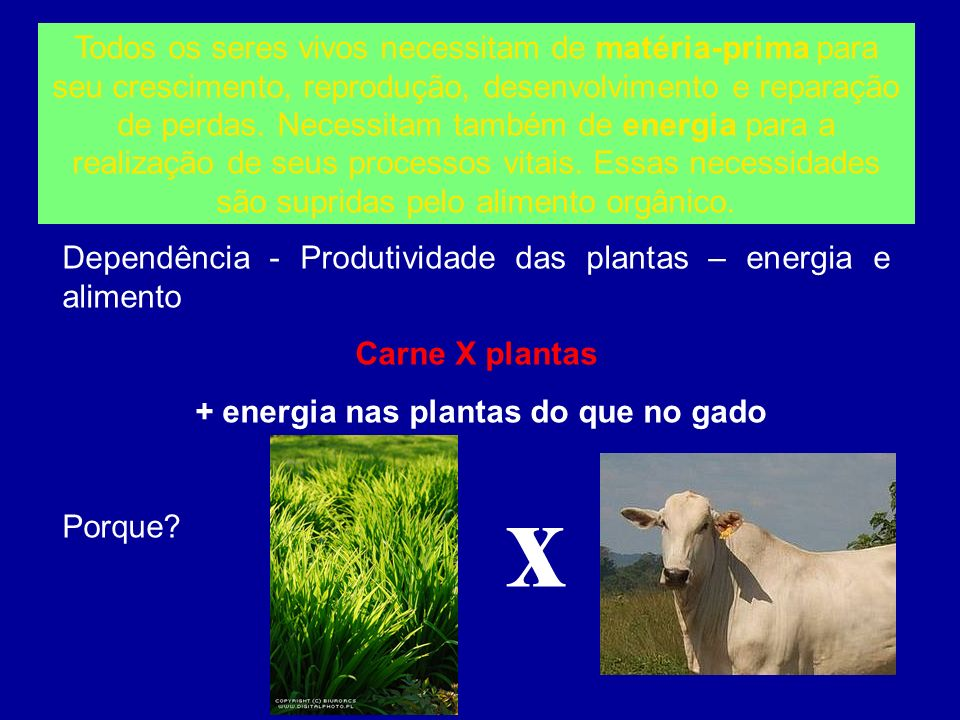 + energia nas plantas do que no gado
