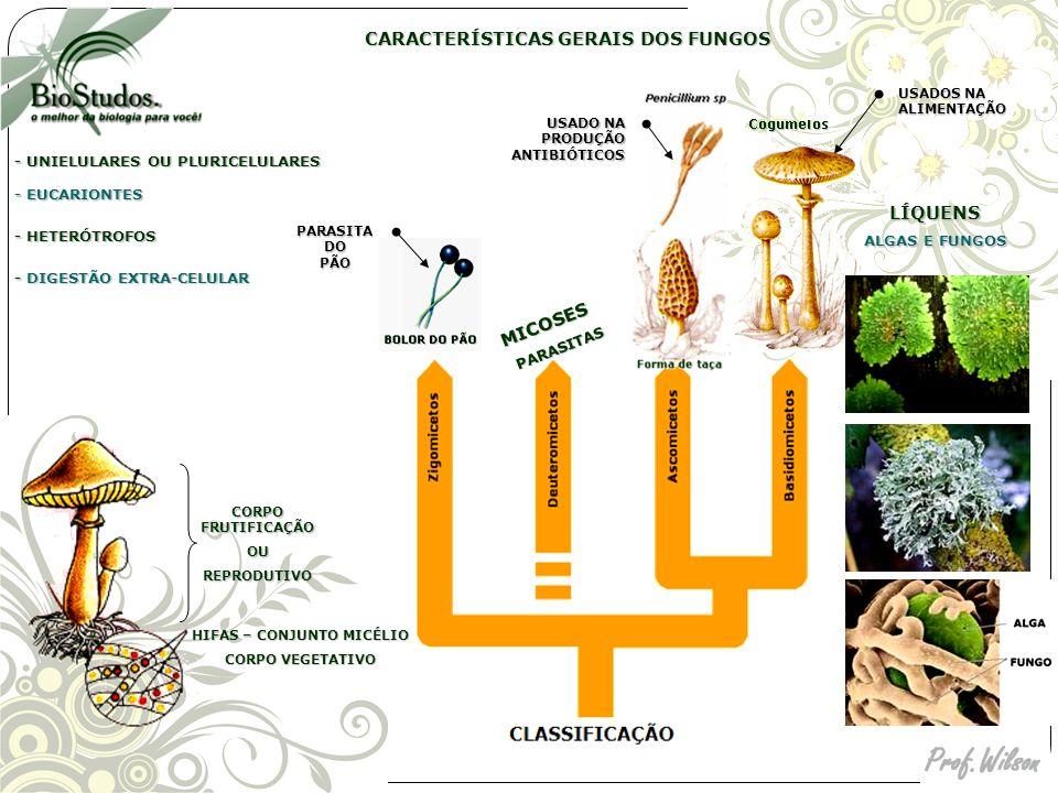 micélium parazita)