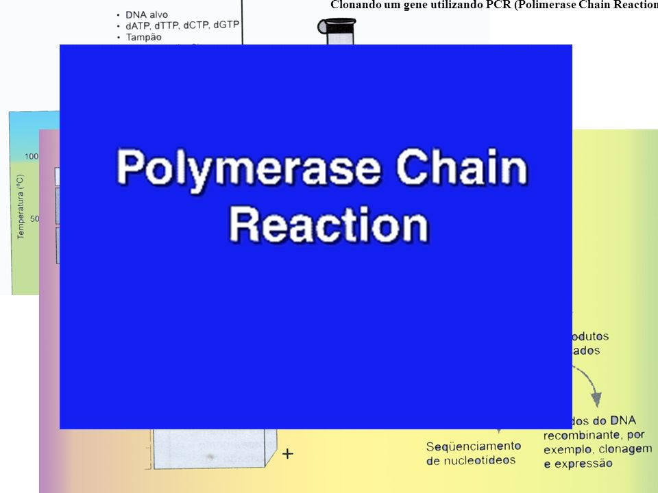 Clonando um gene utilizando PCR (Polimerase Chain Reaction)