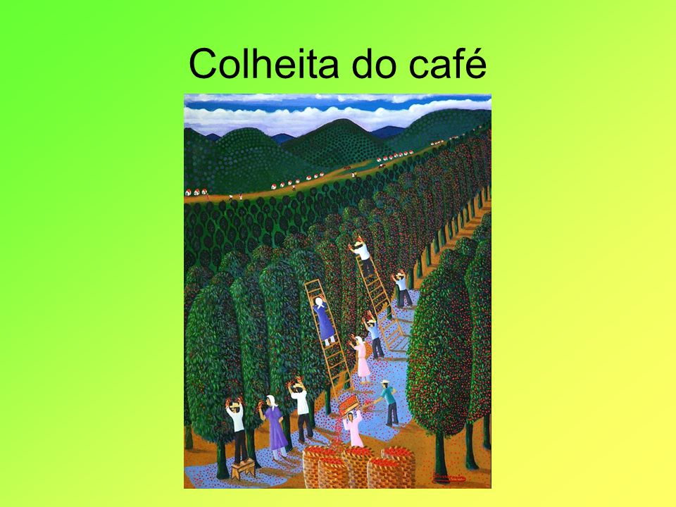 Colheita do café