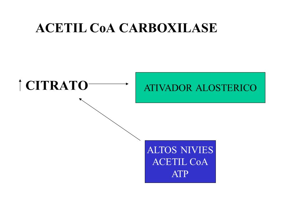 ACETIL CoA CARBOXILASE