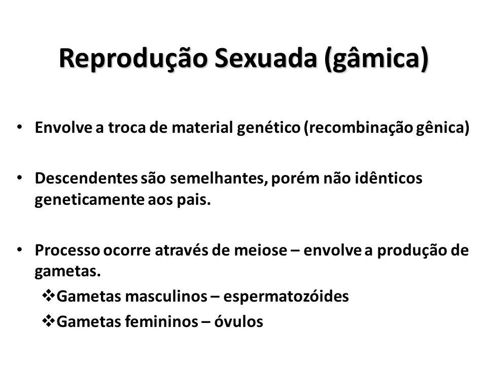b1eb4a0c2d7 8 Reprodução Sexuada (gâmica)