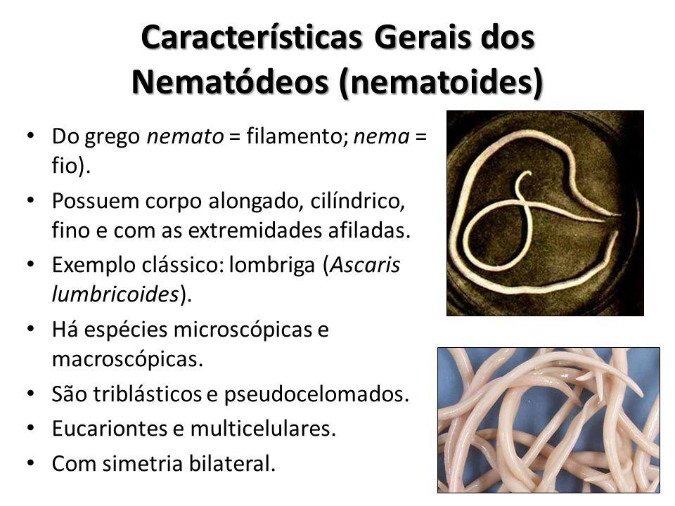 filo nemathelminthes caracteristicas gerais
