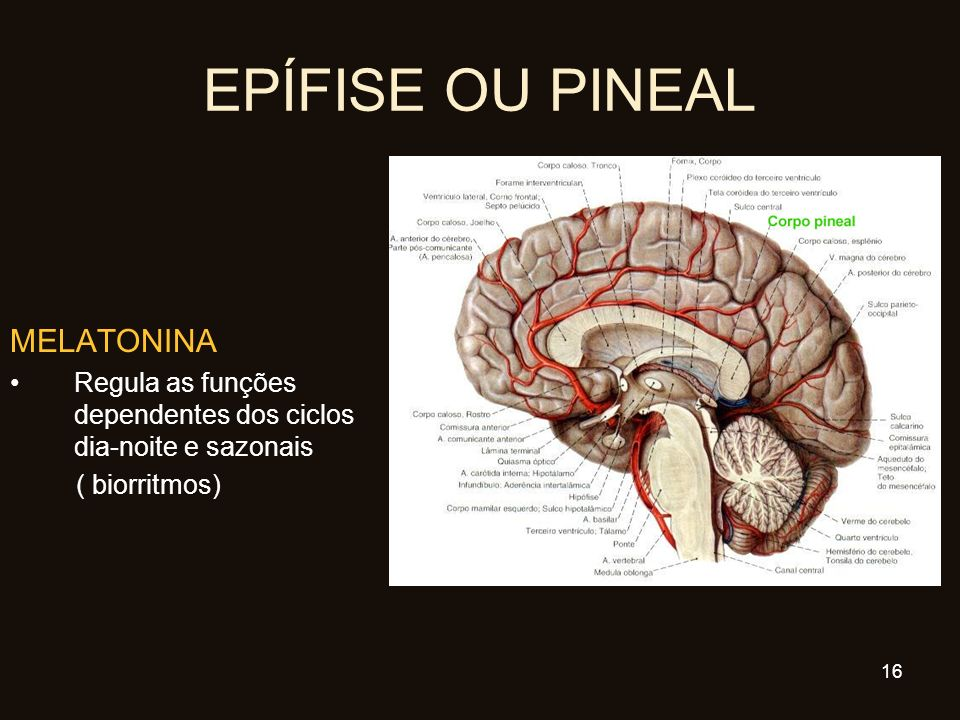 EPÍFISE OU PINEAL MELATONINA