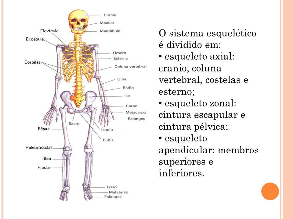 Asombroso Anatomía Juegos Sistema Esquelético Composición - Imágenes ...