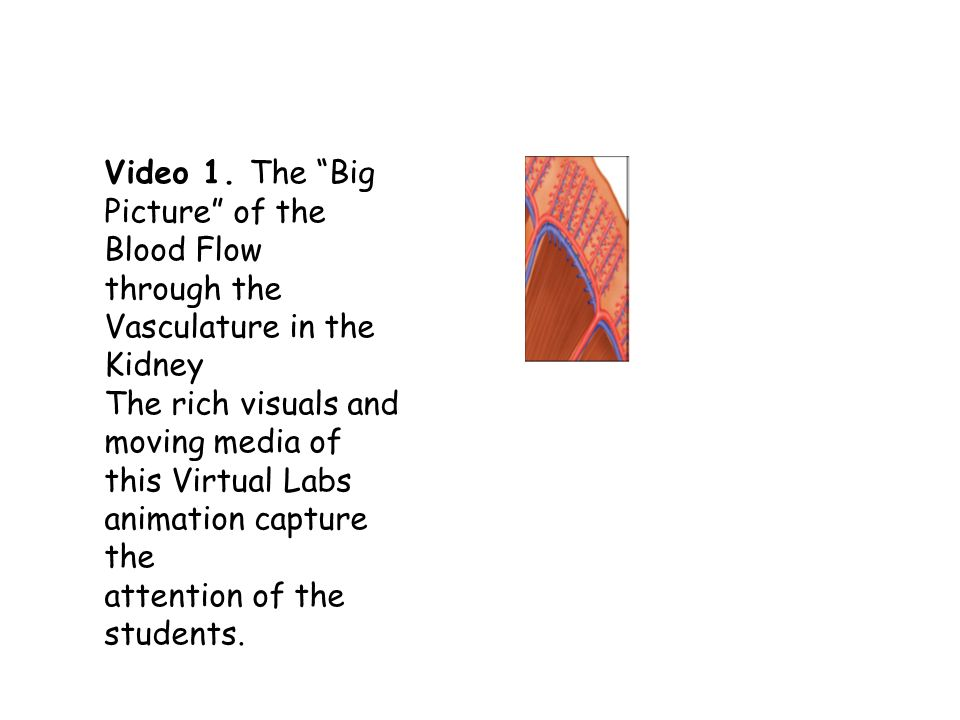 Video 1. The Big Picture of the Blood Flow