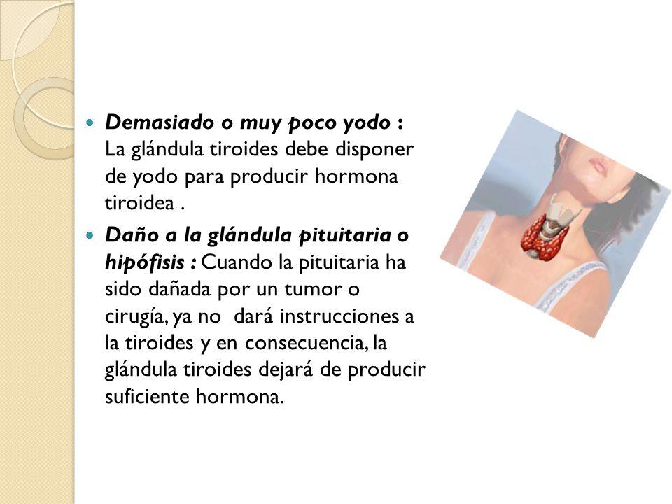 La tiroides es una glándula en forma de mariposa ubicada en el ...