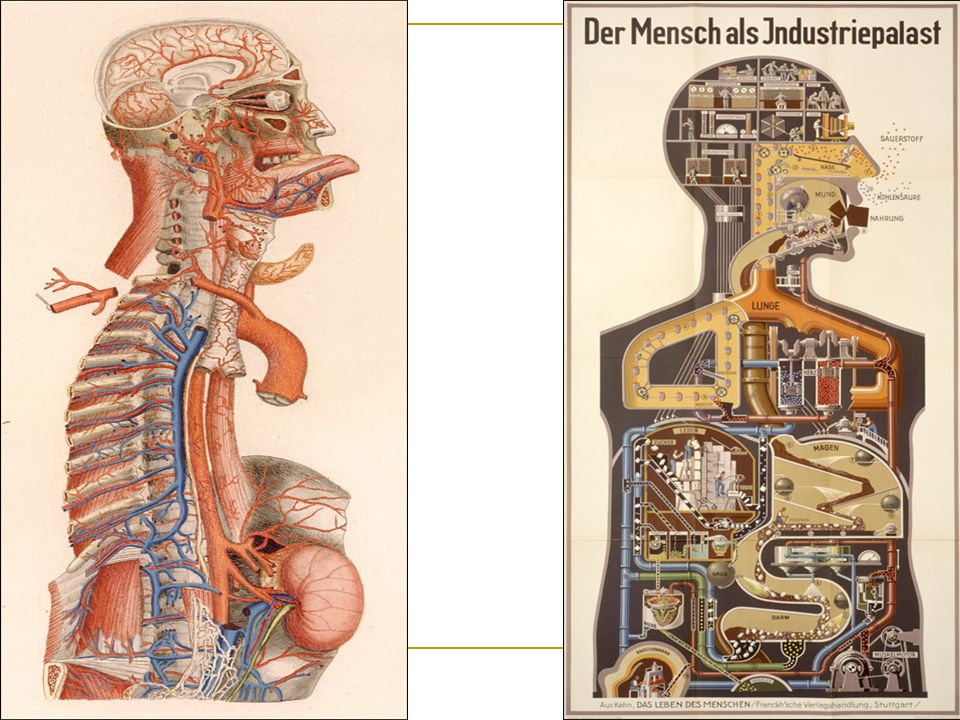 1) Anatomia universale... Florence, Overprinted and hand colored copperplate engraving. National Library of Medicine.