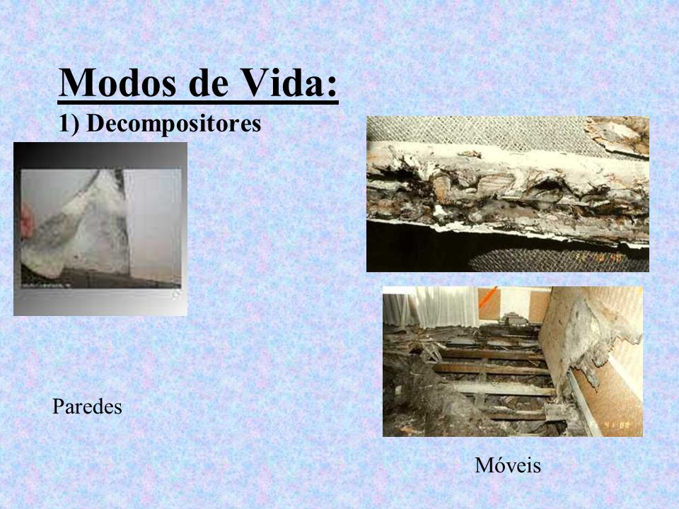 Modos de Vida: 1) Decompositores