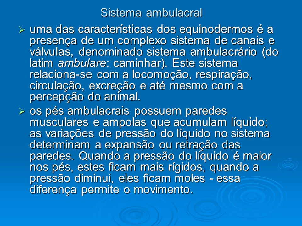 Sistema ambulacral