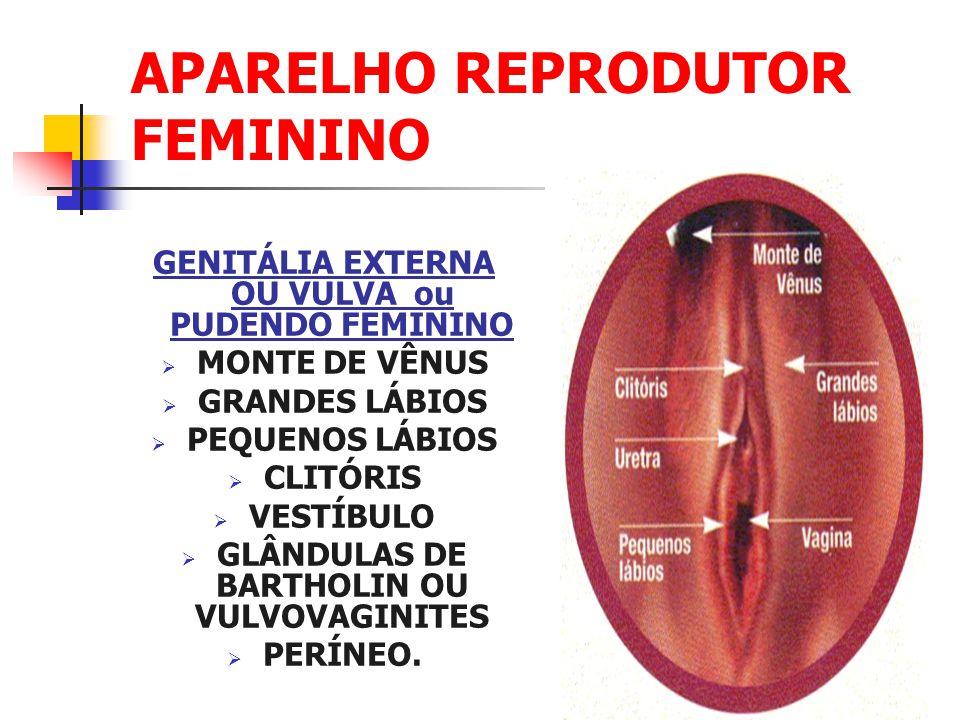 Atractivo Anatomía Vigina Ornamento - Imágenes de Anatomía Humana ...