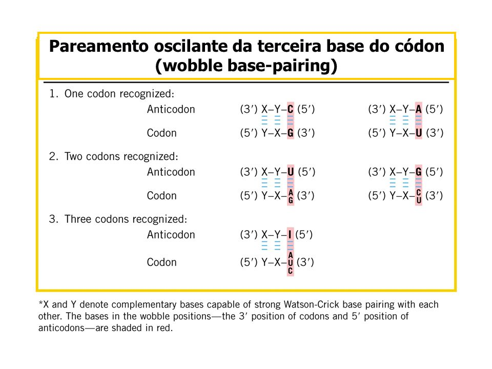 Pareamento oscilante da terceira base do códon (wobble base-pairing)