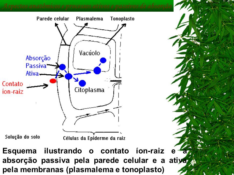 c0efe95c87f 20 Aspectos anatômicos ...