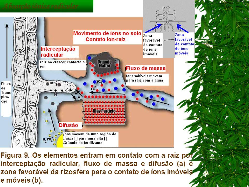 c949633786f 9 Absorção iônica radicular