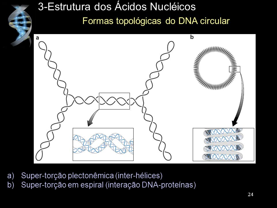 Formas topológicas do DNA circular