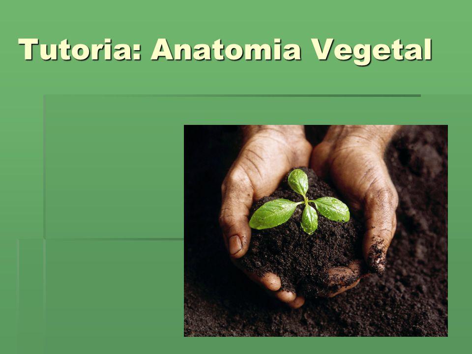 Tutoria: Anatomia Vegetal - ppt carregar