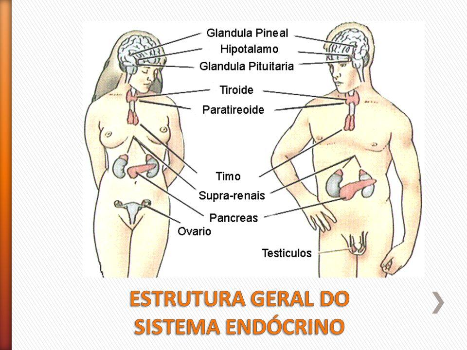 Increíble Sistema Hormonal Foto - Anatomía de Las Imágenesdel Cuerpo ...