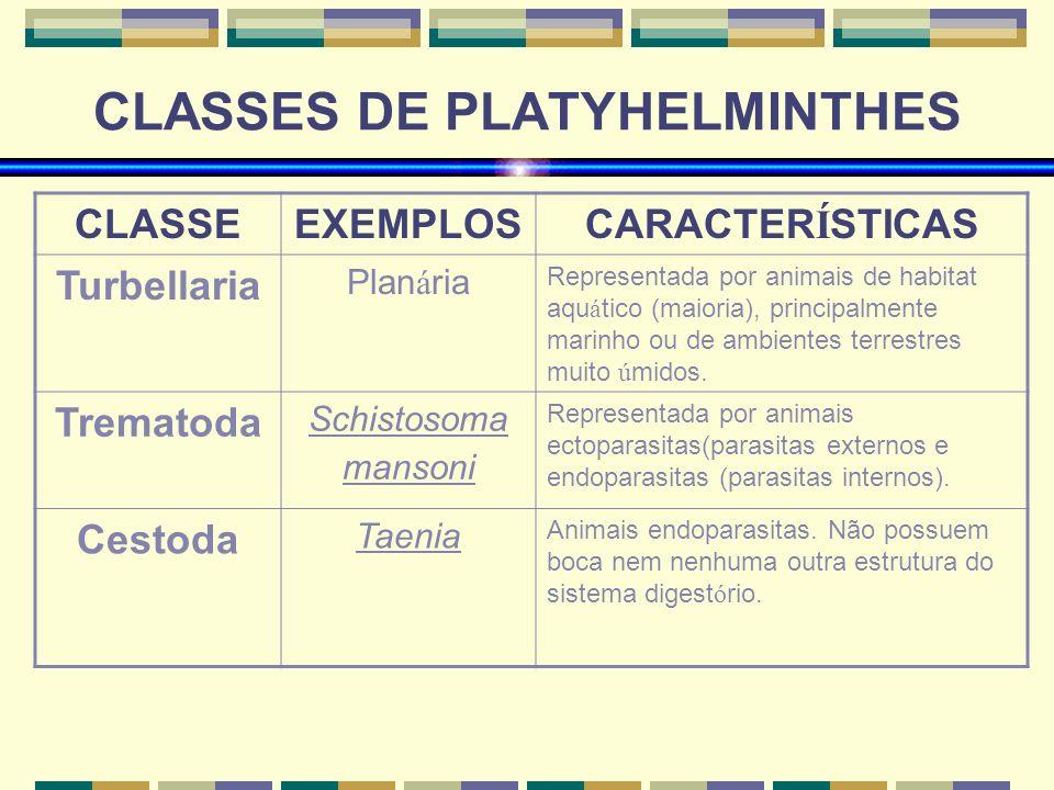 Exemple de clase de platyhelminthes, Viermii plaţi (Platyhelminthes) | Itinerarii pontice