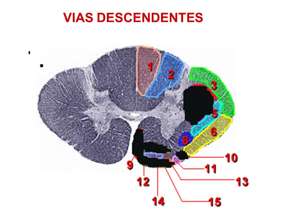 VIAS DESCENDENTES