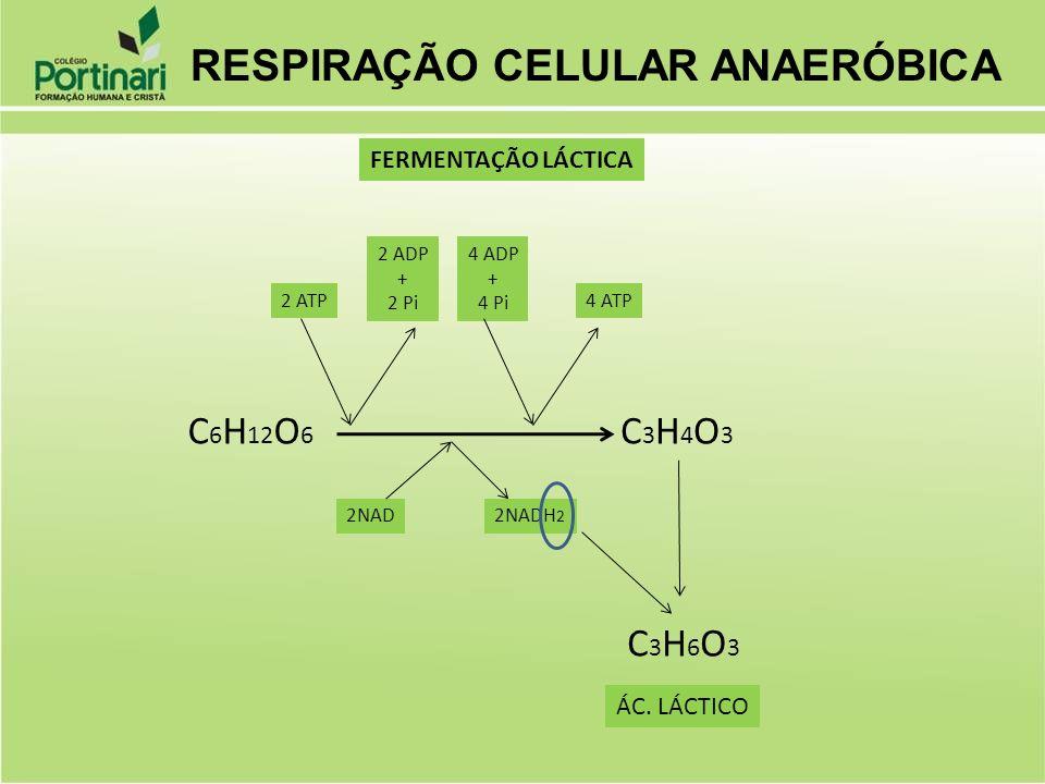 Ppt Carregar: Metabolismo Celular Metabolismo:
