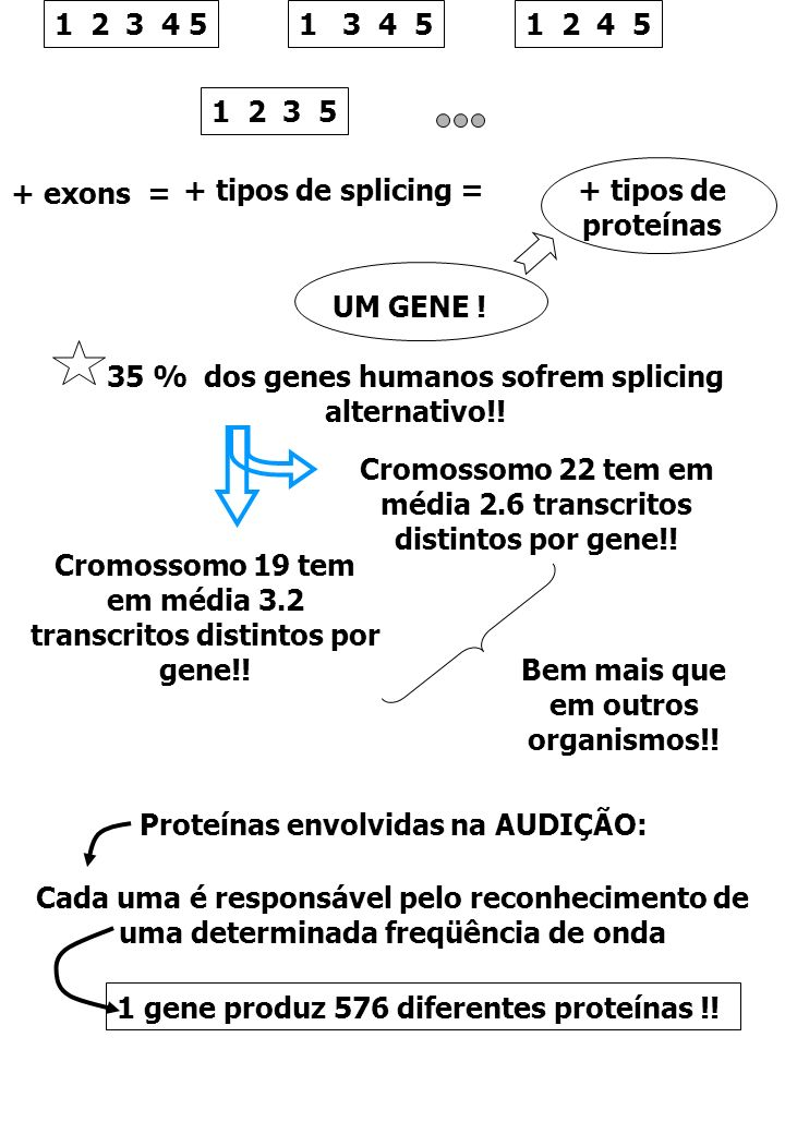 35 % dos genes humanos sofrem splicing alternativo!!