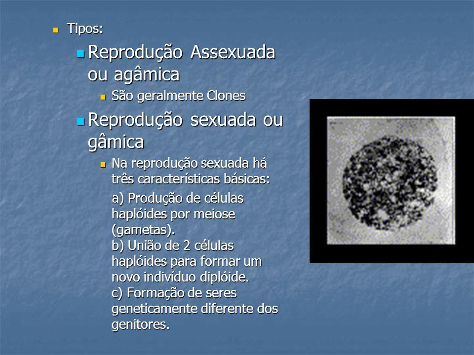4dd3674c790 SISTEMA REPRODUTOR Prof. Édio. - ppt carregar