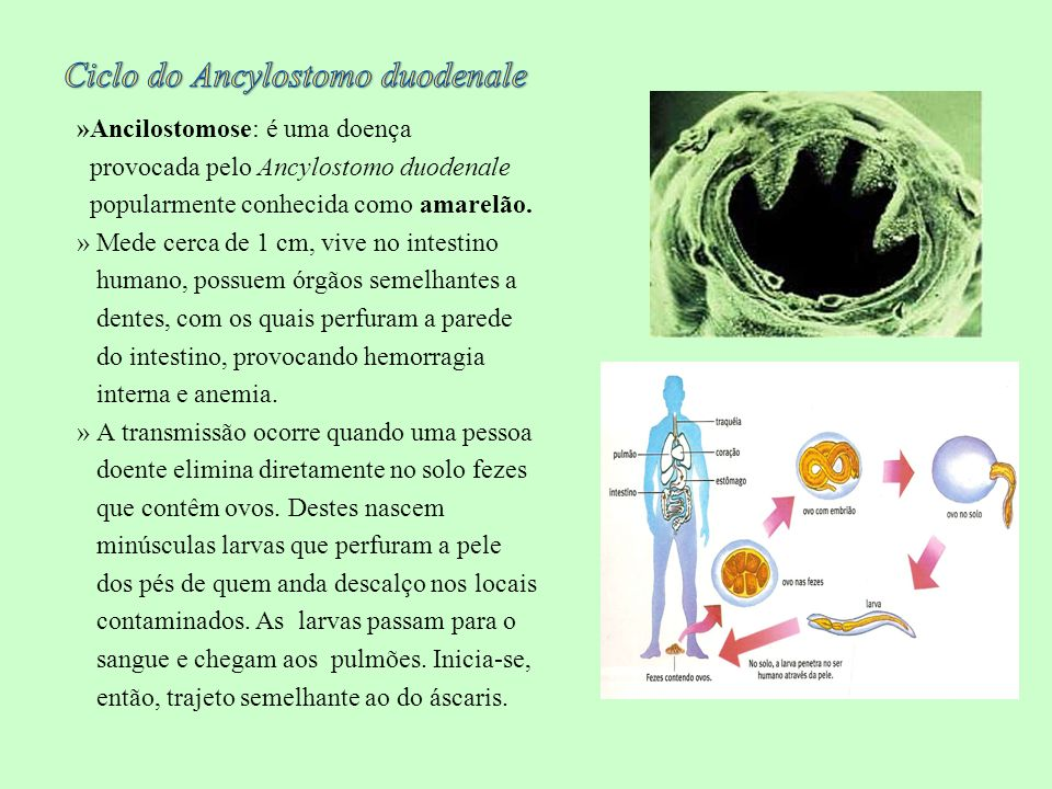 Ciclo do Ancylostomo duodenale