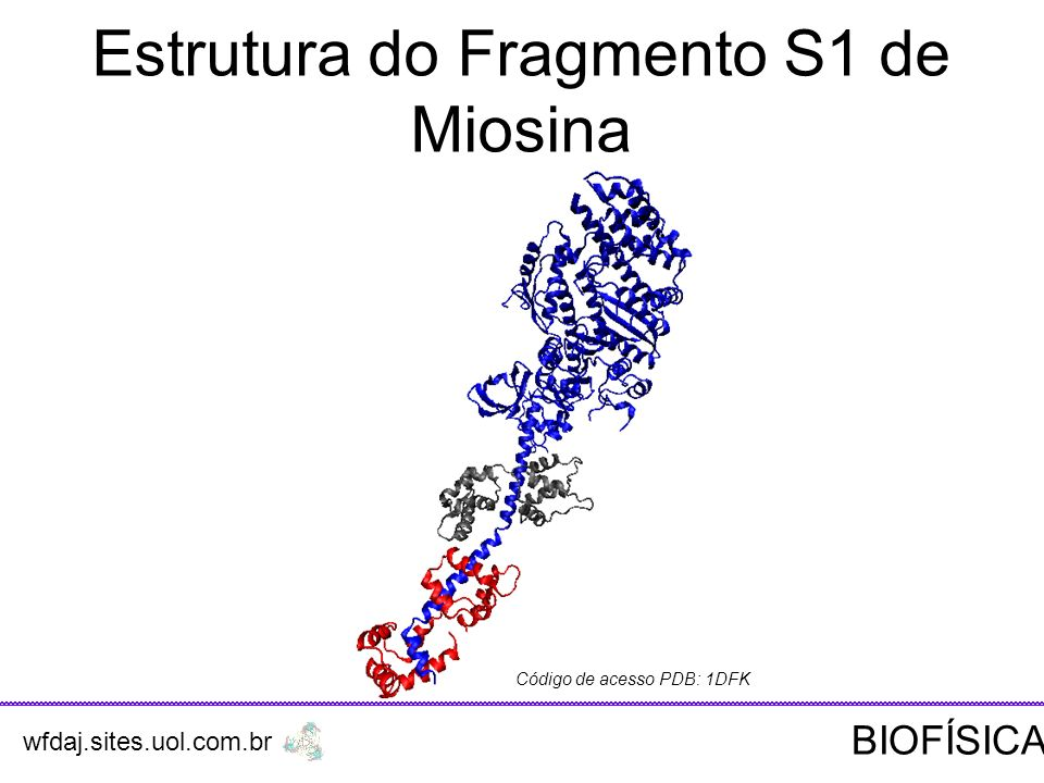 Estrutura do Fragmento S1 de Miosina