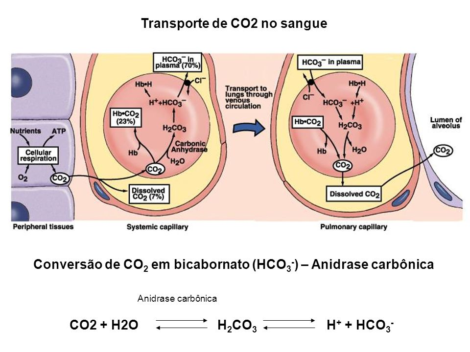 Transporte de CO2 no sangue