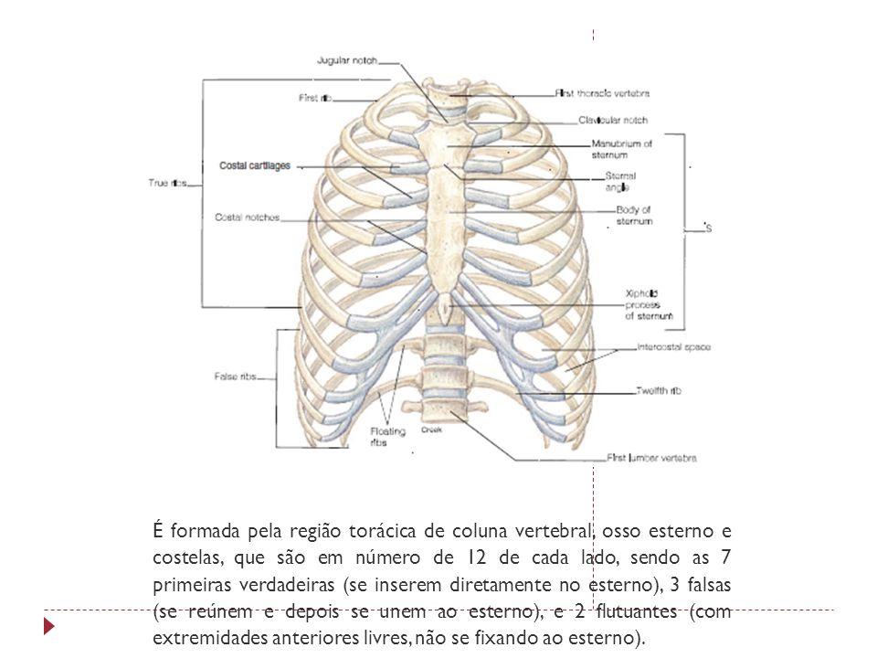 Tecido sseo prof rommel padovan branquinho ppt carregar for O osso esterno e dividido em