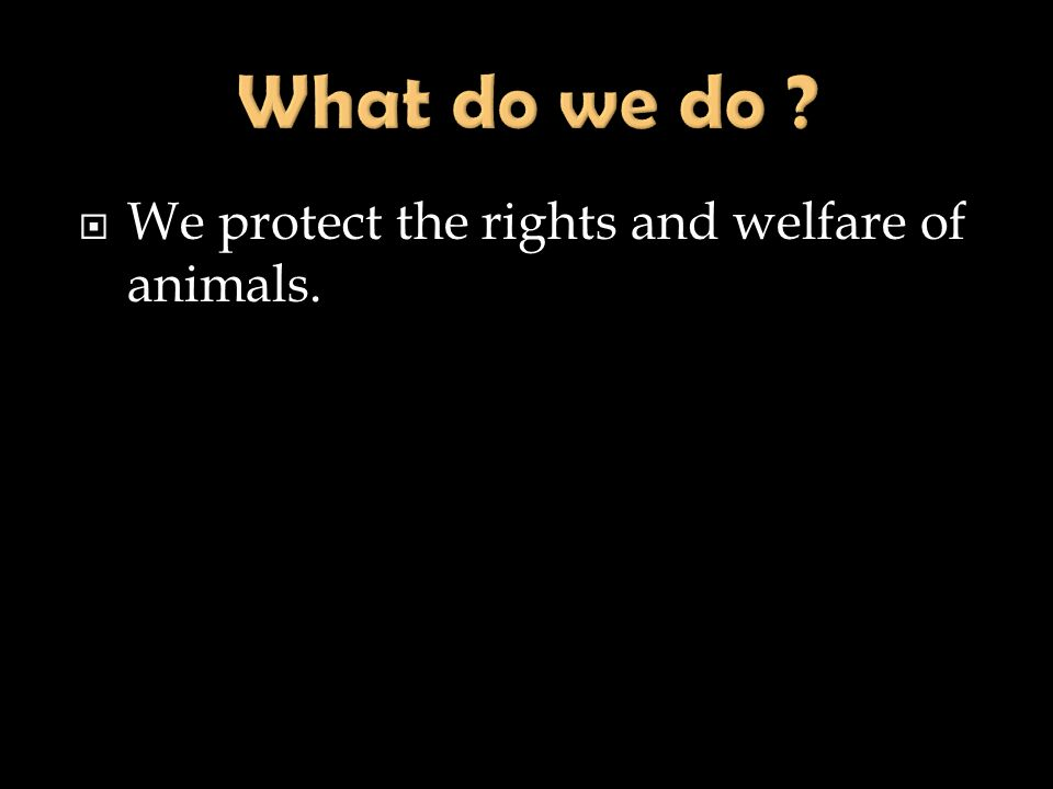 What do we do We protect the rights and welfare of animals.