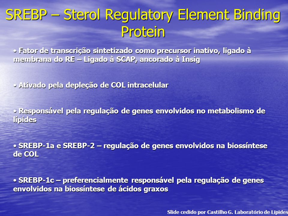 SREBP – Sterol Regulatory Element Binding Protein