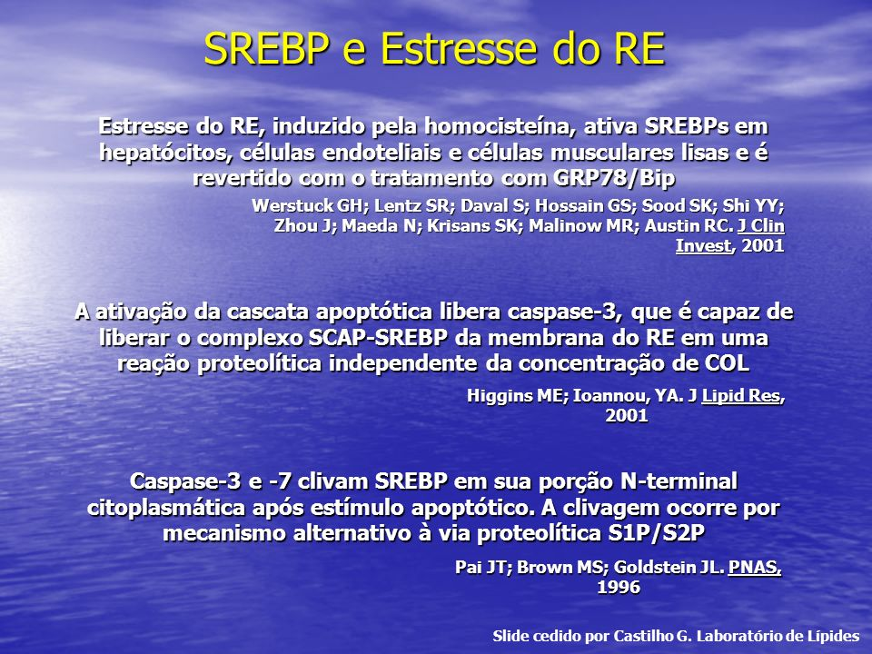 SREBP e Estresse do RE