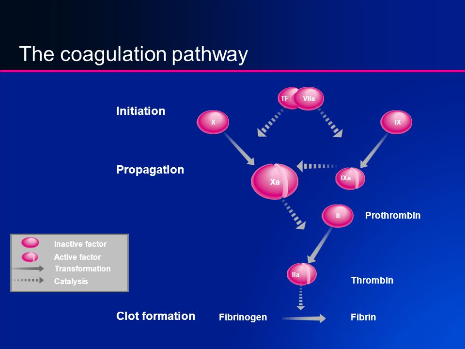 The coagulation pathway