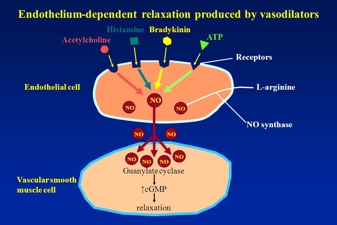 Endothelium-dependent relaxation produced by vasodilators